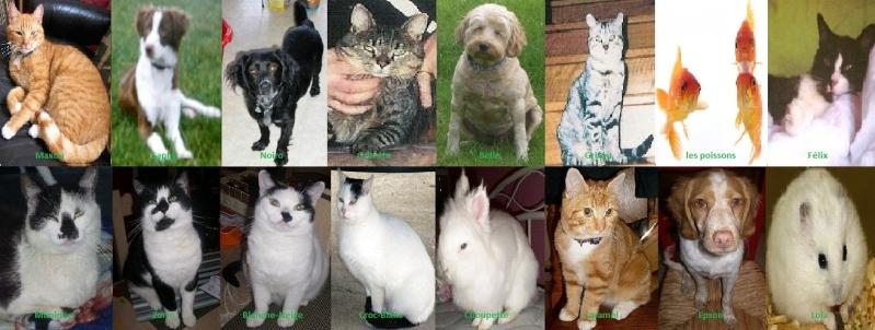 tioneb62 : Je me présente moi et mes chtis' animaux Montag10