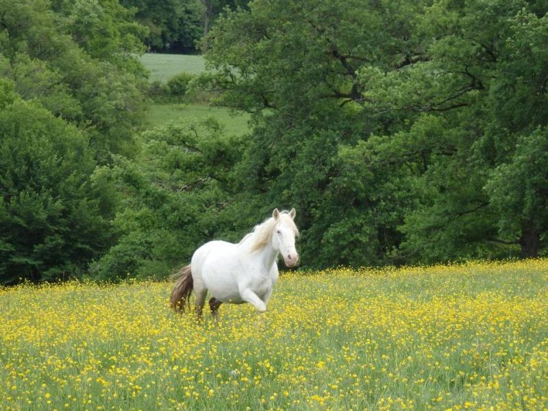 VENUS - ONC poney née en 1987 - adoptée en octobre 2012 par souris73 - Page 7 Youpet10