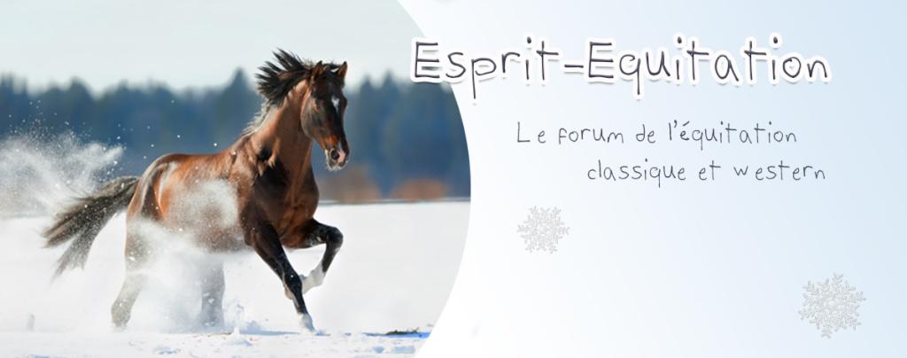 créer un forum : Equitation Classique & Western Esprit11