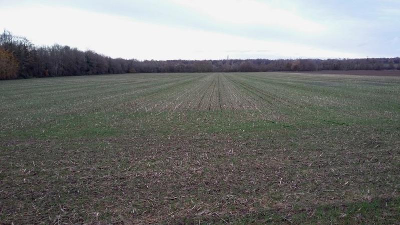 Debut des semis de blé - Page 8 20151110
