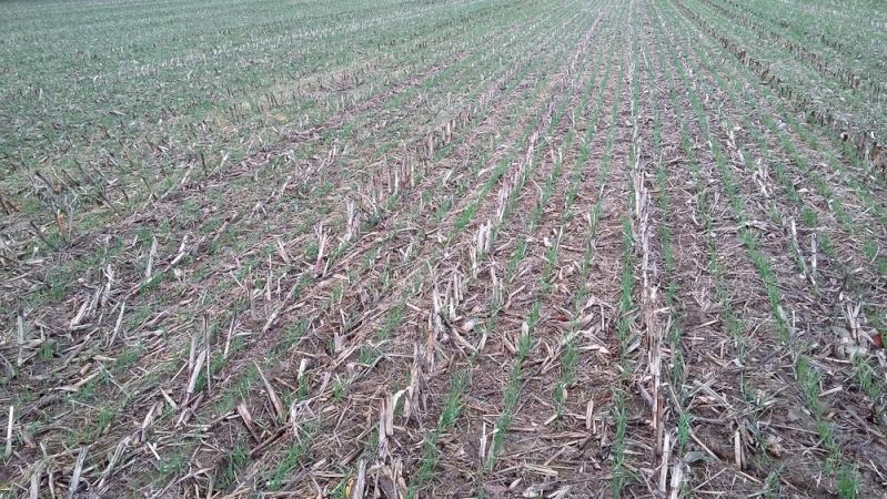 Debut des semis de blé - Page 8 20151111