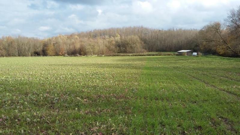 Debut des semis de blé - Page 8 20151112