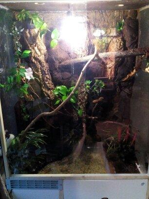 terrarium de mon dragon d'eau  14468210