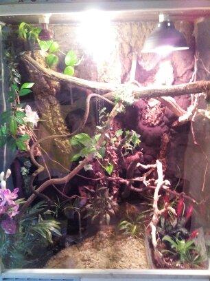 terrarium de mon dragon d'eau  14469010
