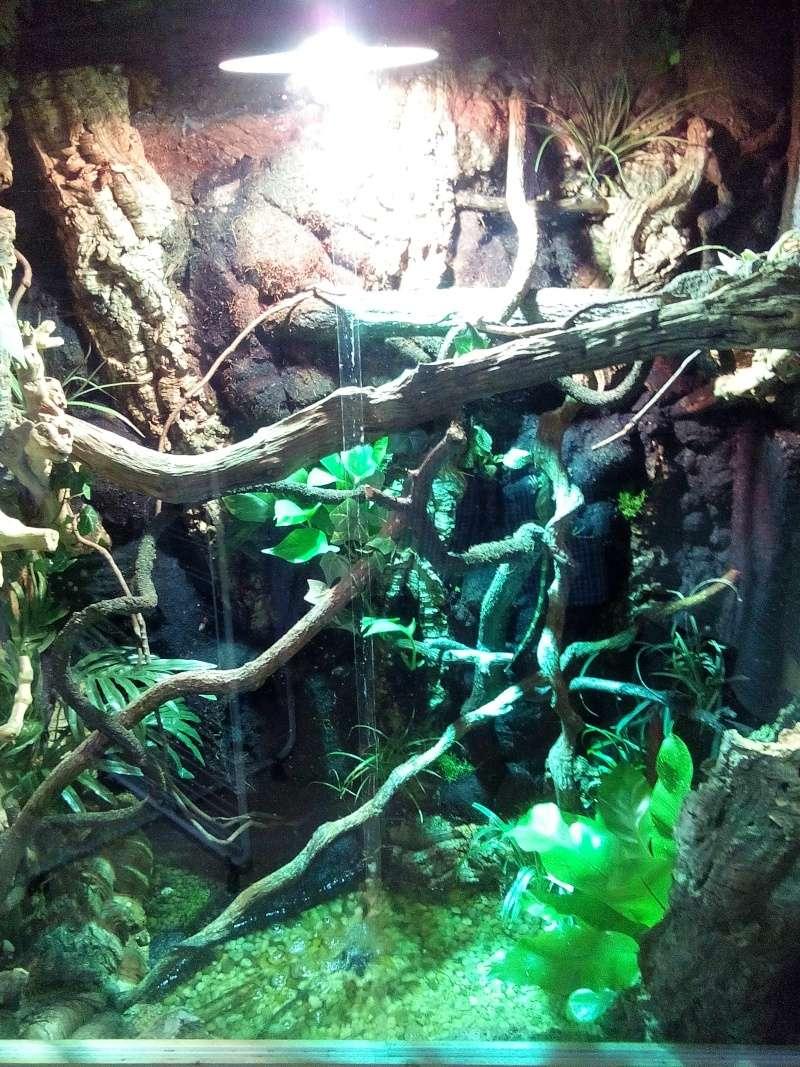 terrarium de mon dragon d'eau  Img_2010