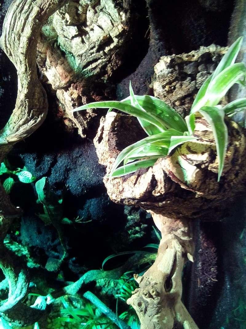 terrarium de mon dragon d'eau  Img_2012