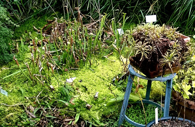 Jardin botanique de Meise en Belgique Jb_mei12