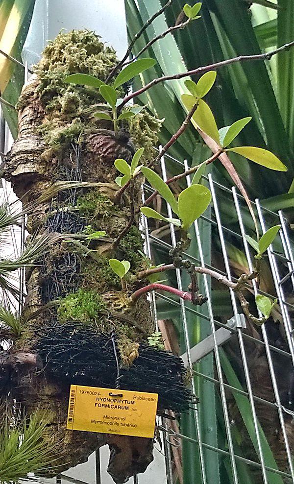 Jardin botanique de Meise en Belgique Jb_mei21