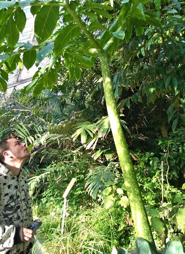 Jardin botanique de Meise en Belgique Jb_mei24