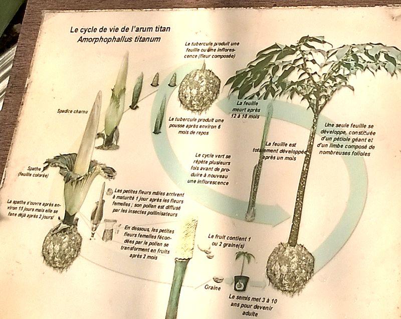Jardin botanique de Meise en Belgique Jb_mei25