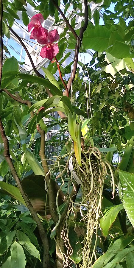 Jardin botanique de Meise en Belgique Jb_mei29