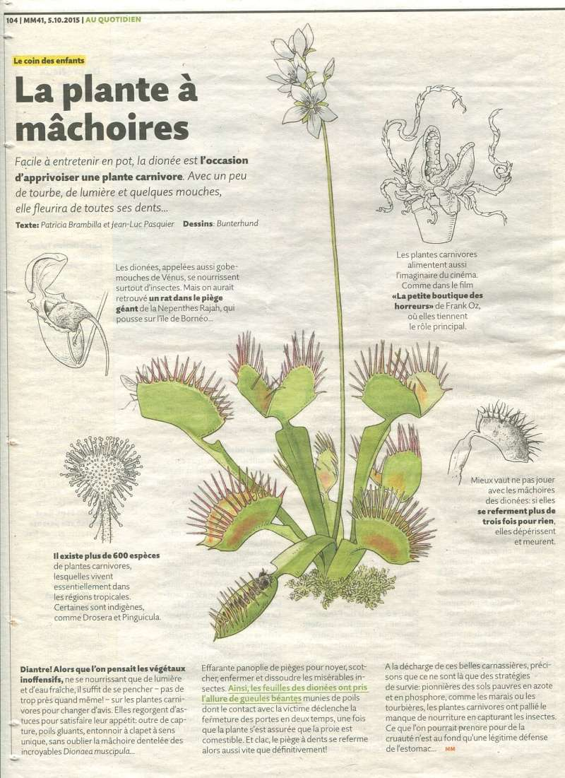 Migros - La plante à machoires Migros10