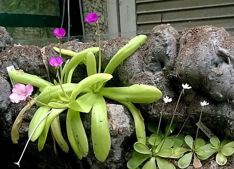 Réalisation d'un terrarium paysagé pour plantes carnivores Ping_m12