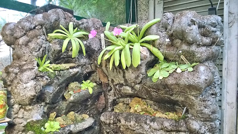 Réalisation d'un terrarium paysagé pour plantes carnivores Vue_d_10
