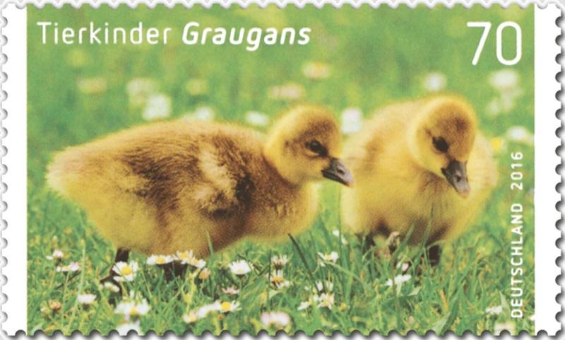 Ausgaben 2016 - Deutschland Grauga11