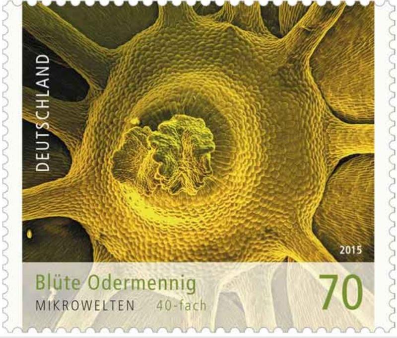 Ausgaben 2015 - Deutschland - Seite 2 Oderma10