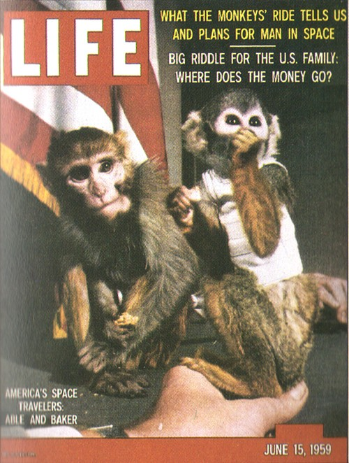 les animaux spatiaux - Page 2 Life_s10