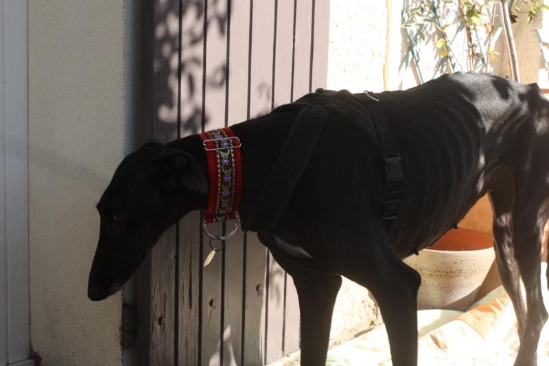 Morena tres belle galga noire agée de 5 ans Scooby France adoptee - Page 3 Img_1116