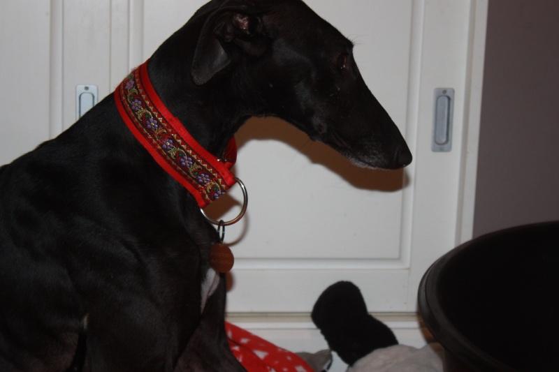 Morena tres belle galga noire agée de 5 ans Scooby France adoptee - Page 4 Img_1313