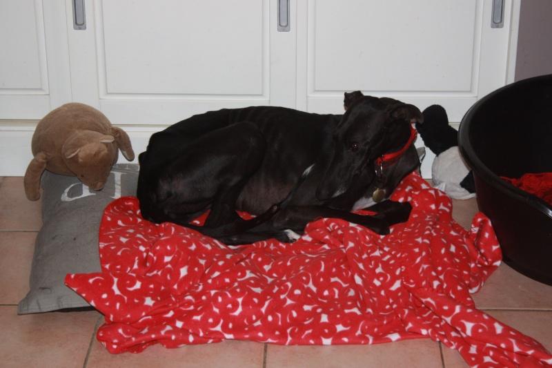 Morena tres belle galga noire agée de 5 ans Scooby France adoptee - Page 4 Img_1314