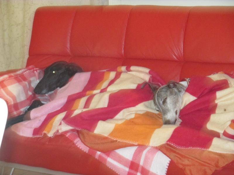 Morena tres belle galga noire agée de 5 ans Scooby France adoptee - Page 5 Img_1315