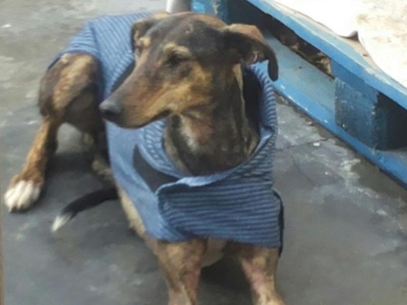 CHATITA, galga brun foncé, 2 ans 1/2  Adoptée Videos10