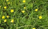 Frankie Knuckles' Gardening Tips Weeds_10