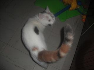 TIANA - 8 mois - Femelle tricolore Dscf0710
