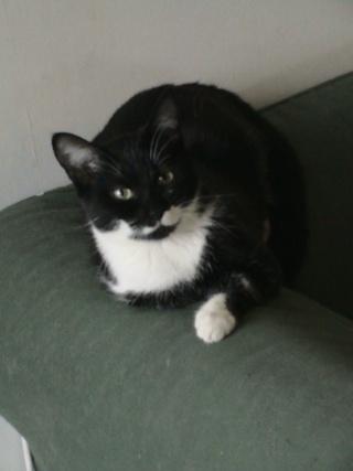 LADY - 6 mois - Femelle noire et blanche Lady_110