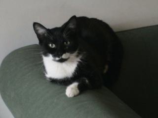 LADY - 6 mois - Femelle noire et blanche Lady_210