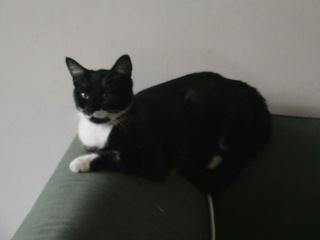 LADY - 6 mois - Femelle noire et blanche Lady_310