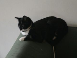 LADY - 6 mois - Femelle noire et blanche Lady_410