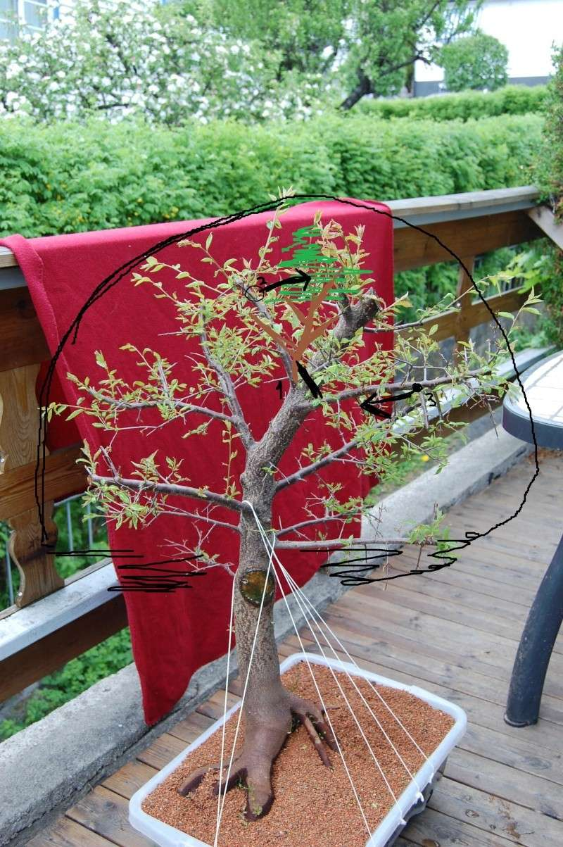 Update on my plum tree. (Now Blackthorn?) Dsc_0717