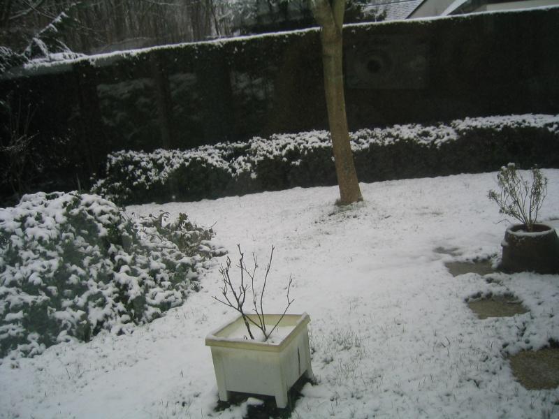 Il neige mon pays Chevre10