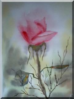 La rose de l'amitié Larose10