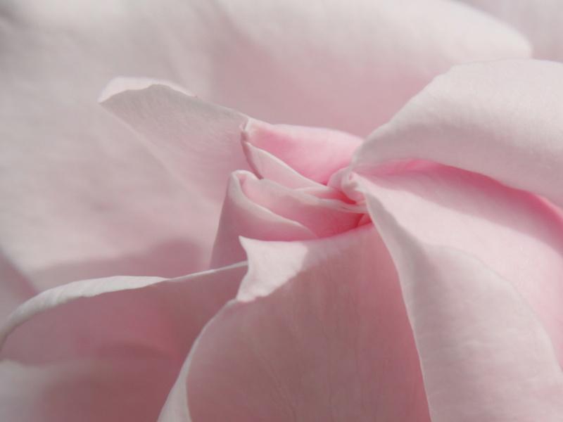 Regrets Rose11