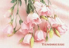 S'attarde le mot Tendre10