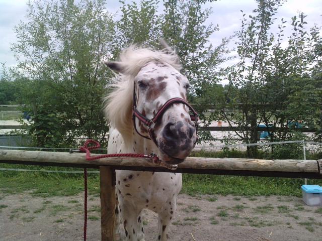 Des grimaces de cheval : venez voter  P2907110