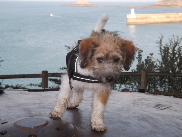 [Clos]Visite post adoption (chien) à Saint-Malo pour Loop Loop110