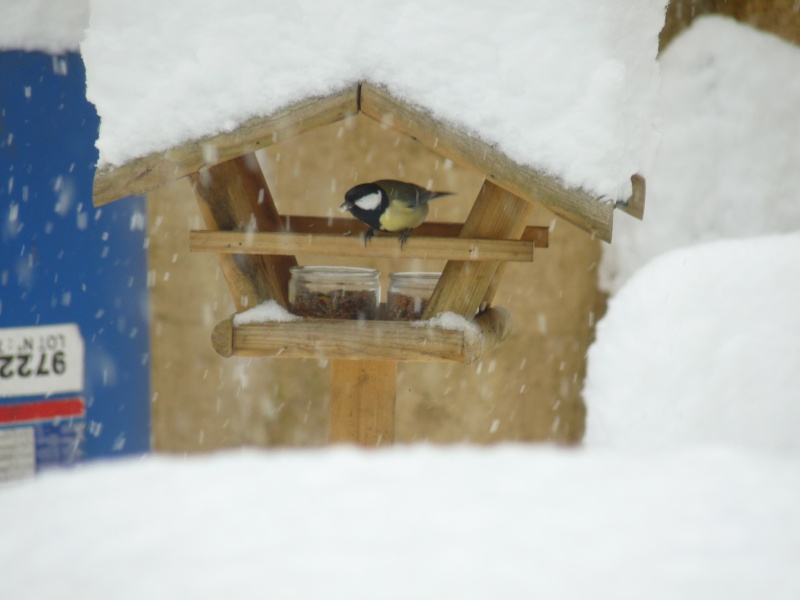 Nourrir les oiseaux en hiver. P1040410