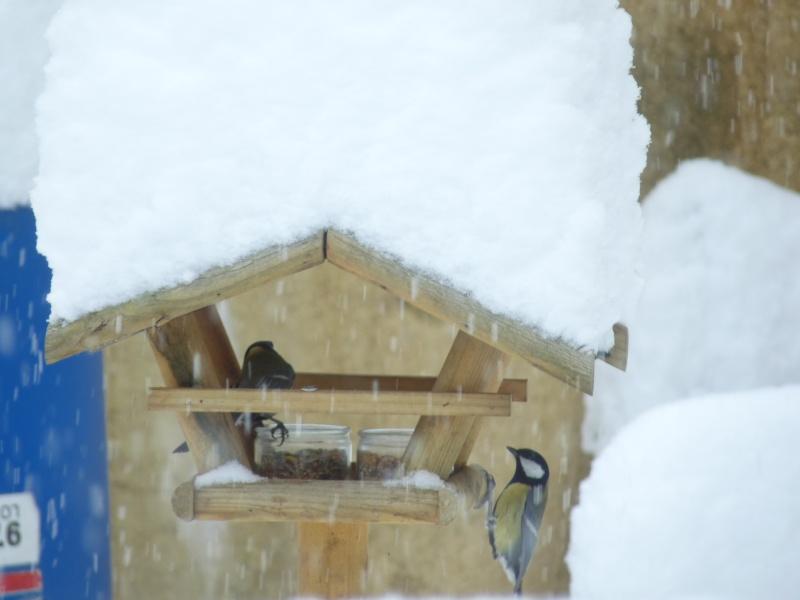 Nourrir les oiseaux en hiver. P1040411