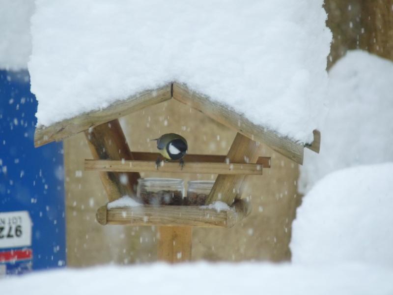 Nourrir les oiseaux en hiver. P1040412