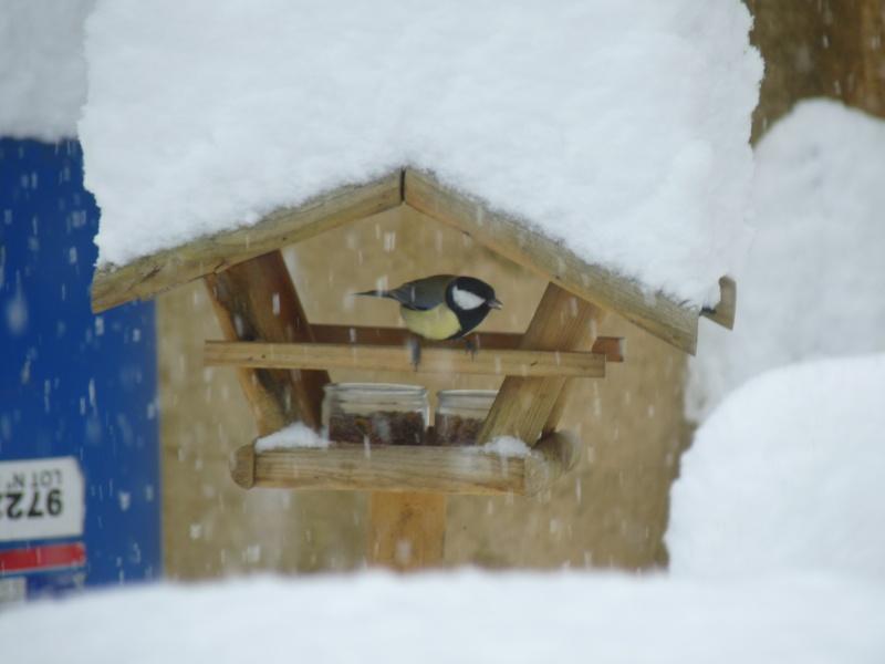 Nourrir les oiseaux en hiver. P1040413