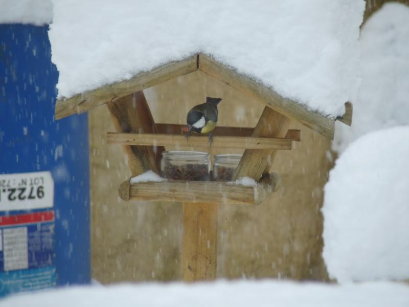 Nourrir les oiseaux en hiver. P1040414
