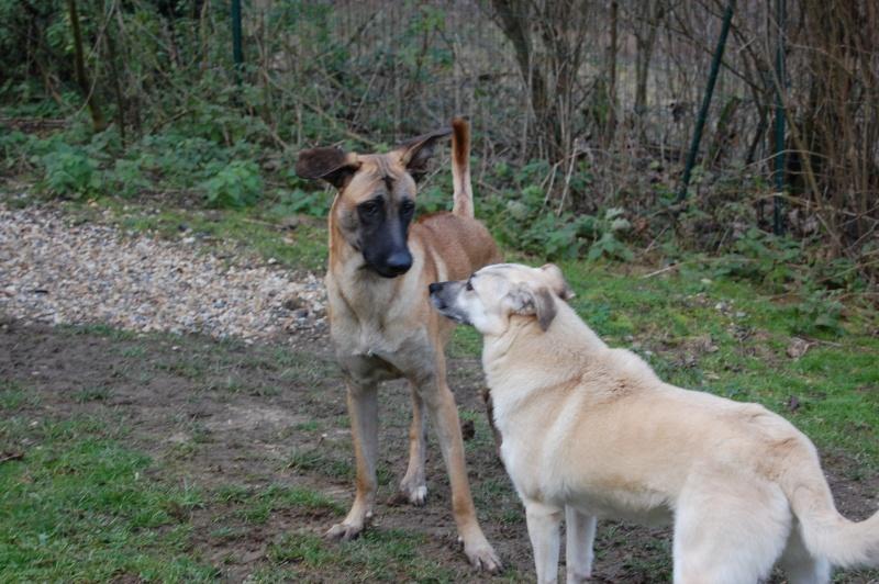 (Re)donner confiance à une chienne terrorisée - Page 7 2016-010