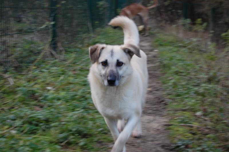 (Re)donner confiance à une chienne terrorisée - Page 7 2016-011