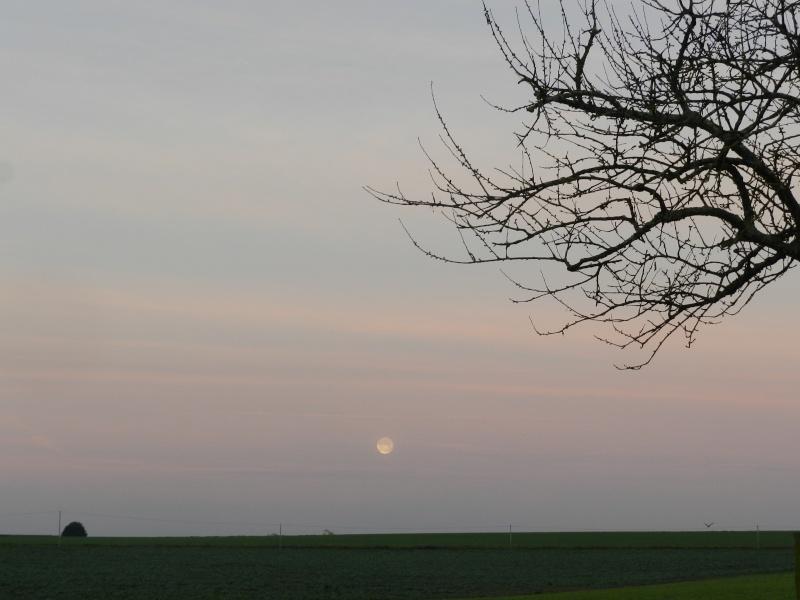 Vendredi 29 janvier 2016, fin de la pose de lambris, Lune et faucon Vauvyr83