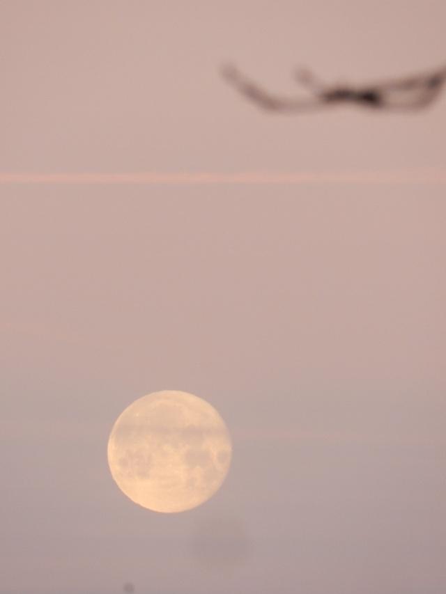 Vendredi 29 janvier 2016, fin de la pose de lambris, Lune et faucon Vauvyr84