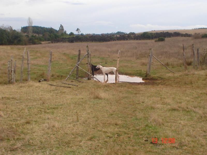 TEMPORADA DE CAZA NUEVA IMPERIAL 2010 Dsc00127
