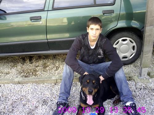 CAID mâle Rott 2 ans cherche famille URGENT - Page 2 Crim0110